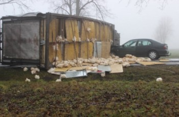 Brojlery na drodze - niebezpieczny wypadek na Podlasiu
