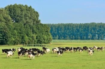 Rekord w historii polskiego mleczarstwa