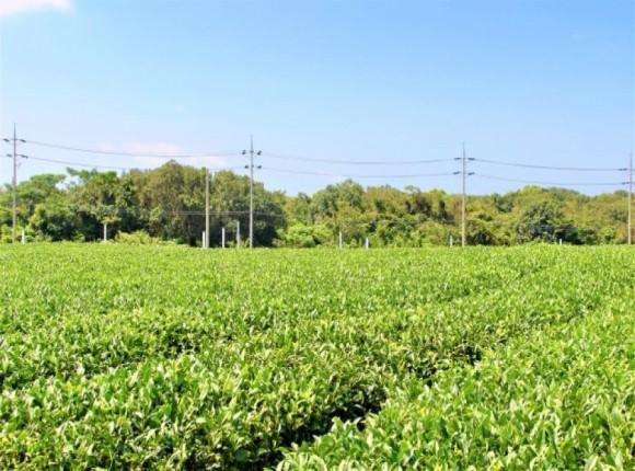 Informacje dla producentów surowca tytoniowego