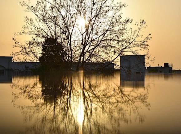 Do 29 marca można składać wnioski o wsparcie na przeciwdziałanie ASF i powodziom