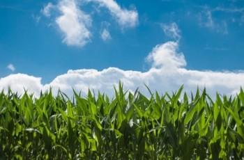 WPR po 2020 roku - Przyszłość żywności i rolnictwa UE