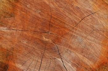 Naukowcy pracują nad stworzeniem drewna twardego jak