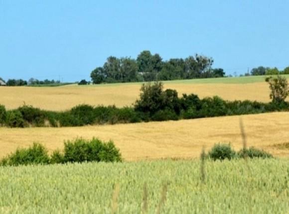 Do 15 lutego można zgłaszać uwagi do projektu Planu Strategicznego dla Wspólnej Polityki Rolnej
